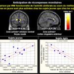 La dopamine et le vieillissement du cerveau