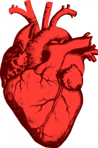 coeur-humain