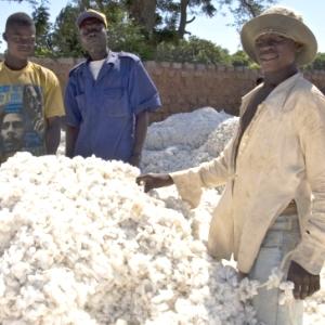 coton-comestible