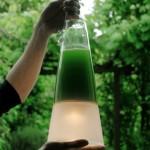S'éclairer aux algues ?