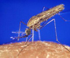 Un vaccin contre la malaria ?